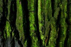 barkentyna Zdjęcie Stock