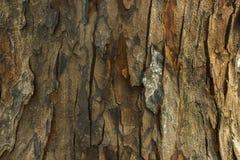Barkentyna drewno Obraz Stock