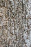 Barkentyna drzewna tekstura Zdjęcie Stock