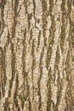 Barkentyna drzewna tekstura Zdjęcia Stock