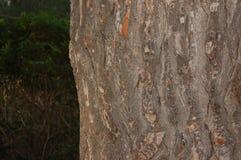 Barkentyna drzewo Obrazy Royalty Free