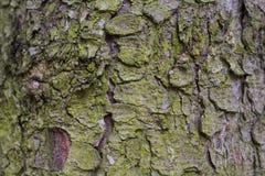 Barkentyna drzewo Zdjęcie Royalty Free