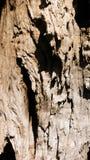 Barkentyna drzewo oliwne Zdjęcia Stock