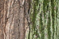 Barkentyna drzewo z i bez mech i liszaju fotografia stock