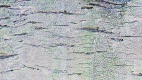 Barkentyna Kokosowy drzewo Zdjęcia Stock