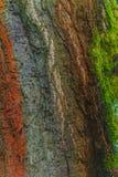 Barkentyna stary drzewo Obrazy Royalty Free