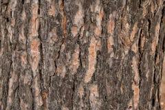 Barkentyna stary drzewo w parku jako tekstura zdjęcie stock