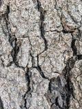 Barkentyna sucha i krakingowa Zdjęcie Stock