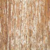 Barkentyna wiąz. Bezszwowa Tileable tekstura Zdjęcia Stock