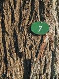 Barkentyna z liczby siedem vertical Zdjęcia Royalty Free