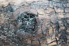 Barkentyna z piaskiem Zdjęcia Stock