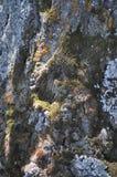 Barkentyna zakrywająca z mech Obraz Stock