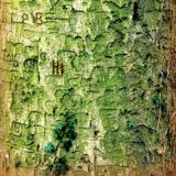 Barkenzusammenfassung Stockbilder