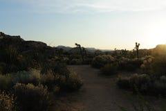 Joshua Tree Barker Dam Area near Sunset royalty free stock photos