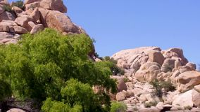 Barker Dam rock formations mountain. Barker dam rock formations with tree calmly waving in the wind. Video filmed at Joshua Tree National Park California USA stock video footage