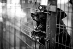 Barking dog behind the fence Royalty Free Stock Images