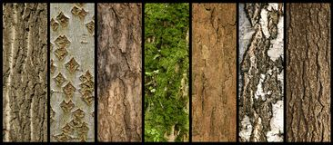 Barks of trees Royalty Free Stock Photos