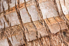 Barkwood in bos Stock Fotografie