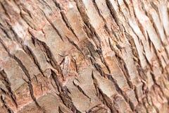 Barkwood dans la forêt Photo libre de droits