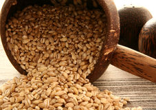 BARLEY. In the bowl and on the table Royalty Free Stock Images