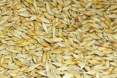 Barley. The background of husky barley Stock Photography