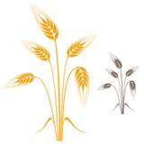 Barley Royalty Free Stock Photography
