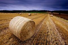 Barley bales Royalty Free Stock Image