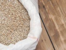 Barley beans. Grains of malt close-up Stock Image