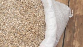 Barley beans. Stock Photography