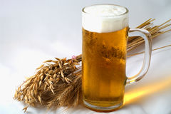 Barley and beer. Spikelets barley, wheat and oat with glass of beer Royalty Free Stock Photos