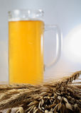 Barley and beer Stock Photos