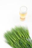 Barley and Beer Stock Image