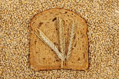 Barley and bread Stock Image