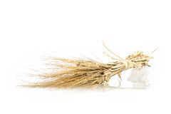 Barley bunch isolated on white background. Grain bouquet Stock Photos