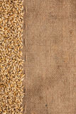 Barley is on burlap Royalty Free Stock Photos