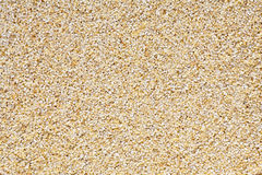 Barley chaff Stock Images