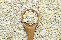 Barley Royalty Free Stock Photos
