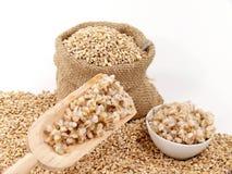 Barley corns raw and cooked Stock Image