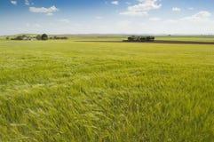 Free Barley Crop Stock Photos - 18435963