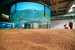 Agriculture display in the Guinness Store. Barley crop presentation on a display in the Guinness Store factory from Dublin stock image