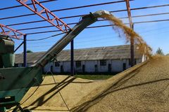 Barley crops being separated out of dust in the yard. Barley crops being separated out of dust in the yard with help of a winnowing fan machine royalty free stock image