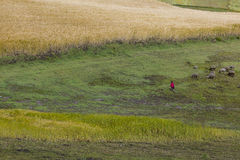 Barley crops, pasture and peasants in the distance Royalty Free Stock Images