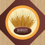 Barley design Stock Photos