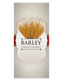 Barley design Stock Image