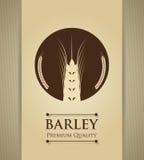 Barley design Stock Photos