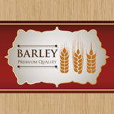 Barley design Stock Photo