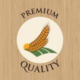 Barley design Royalty Free Stock Photo