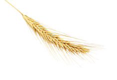 Barley Ears Stock Photography