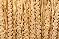 Barley Ears Background Stock Photography