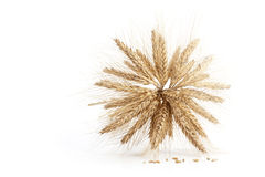 Barley ears on white. Barley ears isolated on white background Stock Photography